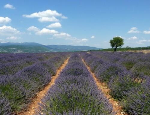 Provence Tourisme déploie son plan pour inviter à (re)découvrir le territoire