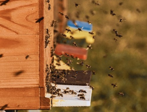 400 000 € pour développer la filière apicole dans la région