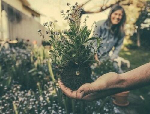 Aix : ils ont inventé des kits de jardinage urbains connectés